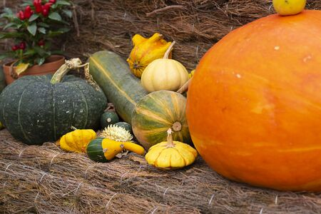 Halloween autumn decorative background round and star shaped colorful squash pumpkins on natural old aged line rope backdrop. Wallpaper, gardening and harvest, healthy product, Horizontal.