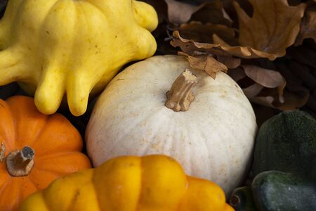 Halloween autumn decorative background star shaped colorful squash pumpkins in natural basket and aged line rope backdrop. Wallpaper about gardening and harvest, healthy product, Horizontal. Close up