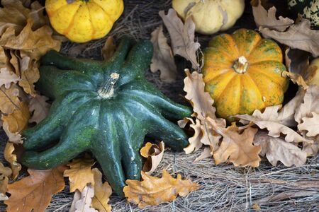 Halloween autumn decorative background star shaped colorful squash pumpkins in natural basket and aged line rope backdrop. Top view. Wallpaper about gardening and harvest, healthy product, Horizontal Imagens