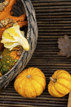 Halloween autumn decorative background round and star shaped colorful squash pumpkins in natural basket and aged line rope backdrop. Wallpaper gardening, harvest, healthy product, Vertical, copy space