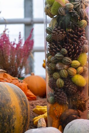 Halloween autumn background pine cones and squirting cucumbers in glass tube and big pumpkins around. Wallpaper about gardening and harvest, design, Vertical with copy space