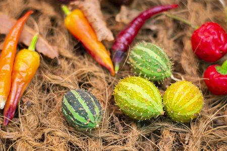 Decorative Ecballium elaterium, also called the squirting cucumber or exploding cucumber and red hot peppers. Closeup. Wallpaper about gardening and harvest, Horizontal