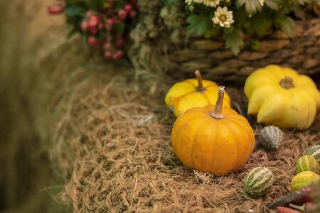 Halloween bright decorative background different color and shape squash pumpkins on natural rustic rope backdrop. Wallpaper about gardening and harvest, healthy product, Horizontal with copy space