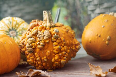 Halloween autumn decorative background round colorful warty squash pumpkins on wooden table with defocused red pepper in pot. Wallpaper gardening, harvest, healthy product, design, Closeup, Horizontal