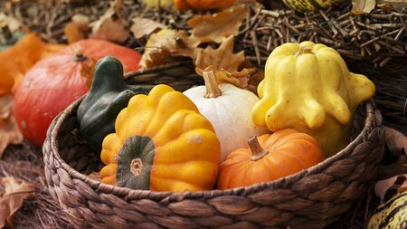 Halloween bright decorative background star shaped colorful squash pumpkins in natural basket and aged line rope backdrop. Wallpaper about gardening and harvest, healthy product, Horizontal. Imagens