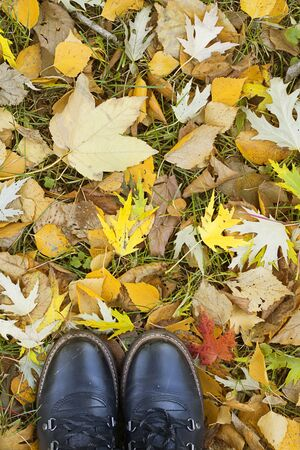 Feet in black boots with shoelaces on Colorful background of fallen autumn leaves from different trees. Bright colorful picture for fall, season concept, walking in park or forest. Vertical copy space