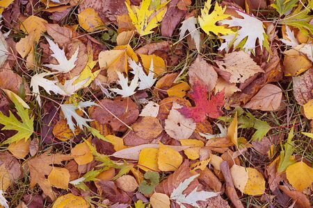 Colorful background of fallen autumn leaves from different trees. Horizontal with copy space. Bright colorful picture for fall, season concept.