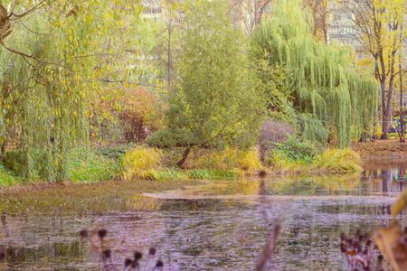 Park pond and Yellow trees. Horizontal with copy space. Bright colors