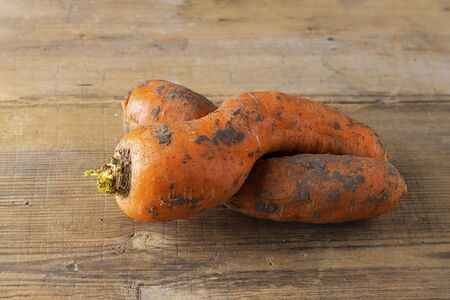 Two curved ugly carrots with pieces of soil on brown old wooden background. Vegetables with unusual strange shape. Food that grocery store and supermarket usually throw away. Horizontal.