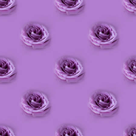 Photographic collage. Seamless pattern with Closeup fresh violet rose on monochrome background, picture for postcard and wallpaper, gift package, repeated visual motive to print on paper. Macro shot.