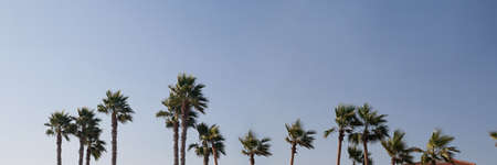 Row of palm trees tops on the background of clear blue sky in sunny summer day. Happy holidays and travel concept. Long Horizontal banner with copy space.
