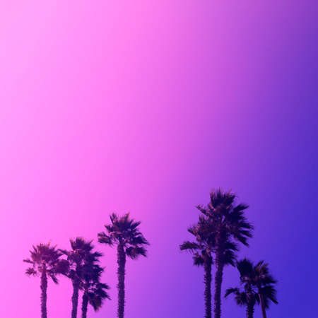 Coconut palm tree on background of beautiful sky in orange. Blue and violet colors. Square with copy space. Trendy bright duotone. Travelling and holiday concept Stock fotó