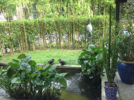 homely: A beautiful homely garden.