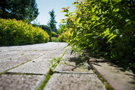 a cobblestone path runs through the green garden on a Sunny summer day, a garden with flowers trees and bushes, Zdjęcie Seryjne