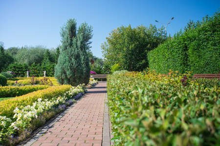 cobblestone path in the city Park between green bushes, flowers and trees, blue sky and benches in the Park Zdjęcie Seryjne