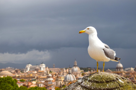 Kingfisher on the top of Saint Angelo Castle Stock Photo