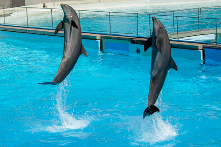 Dolphins Performance at Zoomarine, Rome, Italy Stock Photo - 120372006