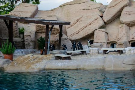 Penguins habitat at Zoomarine, Rome, Italy Stock Photo - 120372094