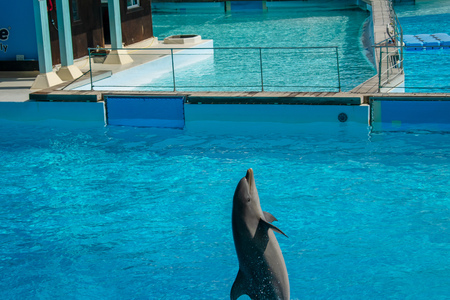 Rome, Italy - September 2018: Dolphins Performance at Zoomarine Stock Photo - 120452899