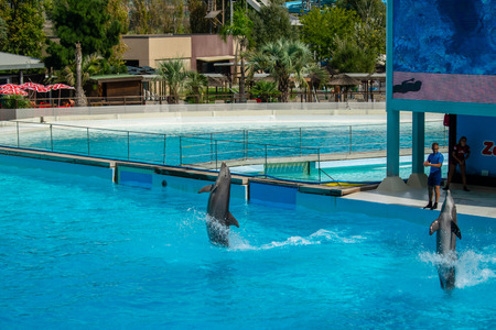 Rome, Italy - September 2018: Dolphins Performance at Zoomarine Stock Photo - 120452900