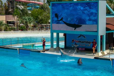 Rome, Italy - September 2018: Dolphins Performance at Zoomarine Stock Photo - 120452901