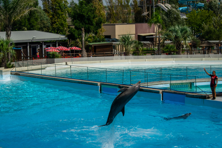 Rome, Italy - September 2018: Dolphins Performance at Zoomarine Stock Photo - 120452906