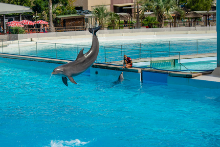Rome, Italy - September 2018: Dolphins Performance at Zoomarine Editorial