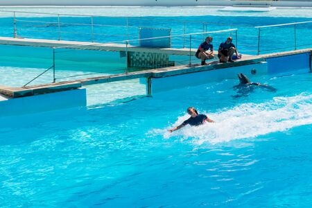 Dolphin carrying on his back his trainer at the surface of the water Stock Photo - 140760047