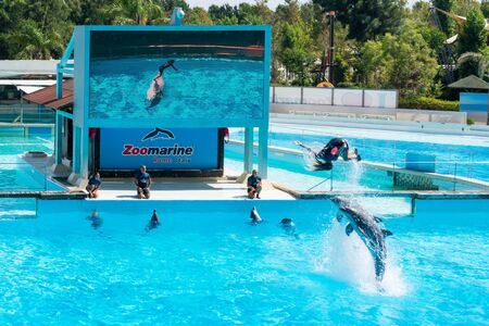 Dolphins in the middle of their show while helping their trainer to jump out of the water, Zoomarine Stock Photo - 140760049