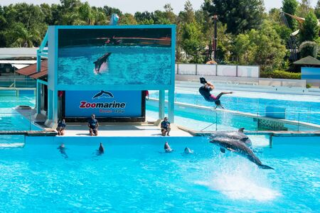 Dolphins in the middle of their show while helping their trainer to jump out of the water, Zoomarine Stock Photo - 140760050