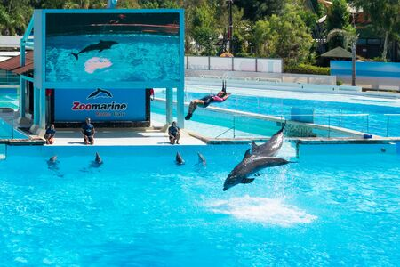Dolphins in the middle of their show while helping their trainer to jump out of the water, Zoomarine Stock Photo - 140760051