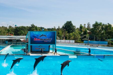 Dolphins in the middle of their show at Zoomarine Stock Photo - 140760052
