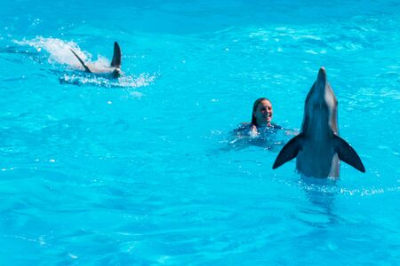 Dolphins in the middle of their show accompanied by their trainer Stock Photo - 140760053