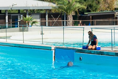 Dolphin fed by his trainer Stock Photo - 140760054