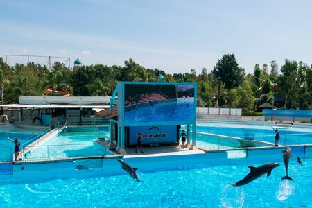 Dolphins in the middle of their show at Zoomarine Stock Photo - 140760063