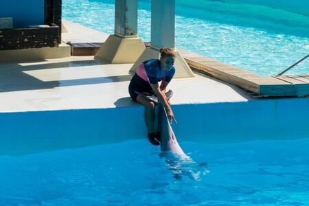 Dolphin cared by his trainer, Zoomarine Stock Photo - 140760066