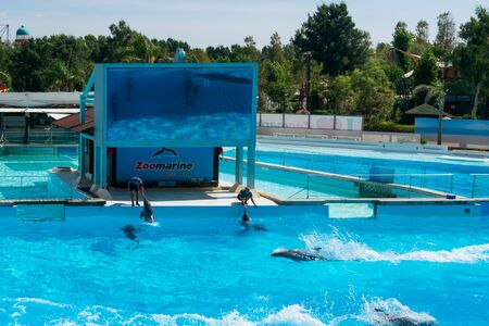 Dolphins in the middle of their show at Zoomarine Stock Photo - 140760067
