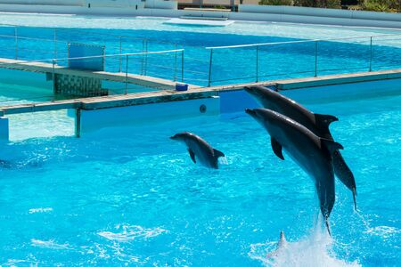 Dolphins that jump from the water to entertain the audience, Rome, Italy Stock Photo - 140760069