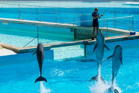Dolphins in the middle of their show at Zoomarine Stock Photo - 140760070