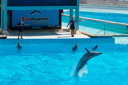 Dolphin back flip in front of his audience, Zoomarine Stock Photo - 140760073