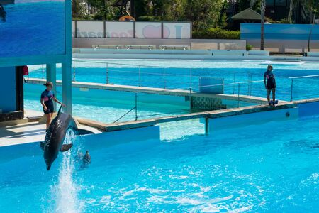 Dolphin having fun in front of his audience, Zoomarine Stock Photo - 140760074
