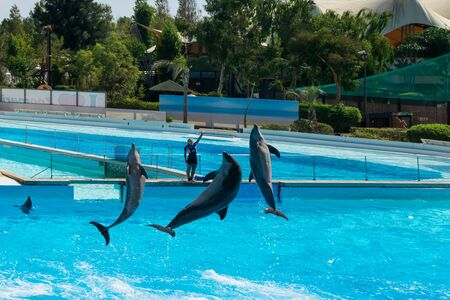 Dolphins in the middle of their show Stock Photo - 140760078