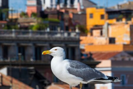 A Seagull proudly sitting on a historic building from Rome, Italy 스톡 콘텐츠