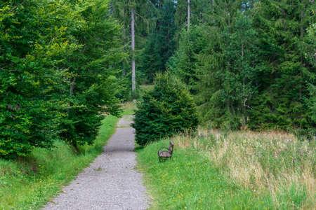 The way to bears' cave, Fairies Garden, Borsec, Romania Stock Photo