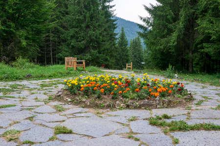 Flowers from the Fairies Garden, Borsec, Romania