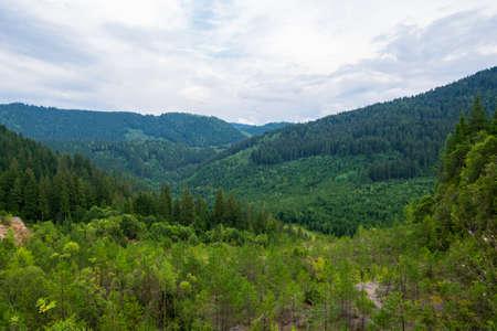 A fir forest landscape from the Fairies Garden, Borsec, Romania