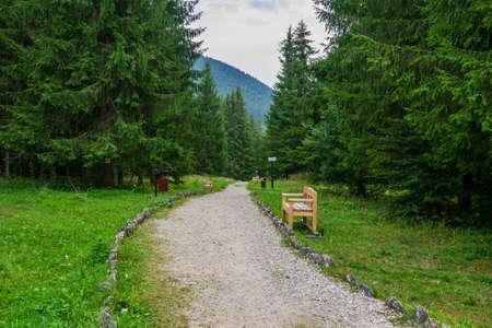 A path from the Fairies Garden, Borsec, Romania