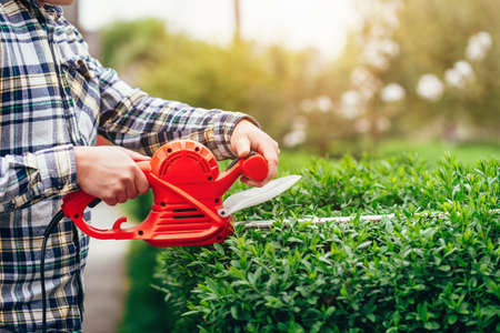 Man mows shrubs with electric trimmer for bushes 写真素材