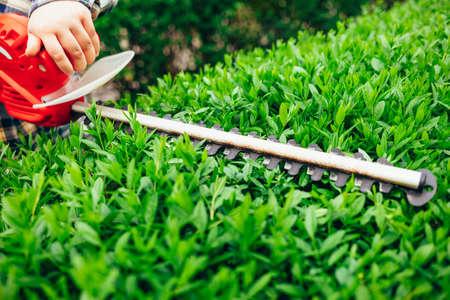 Cutting a shrub with an electric brush cutter
