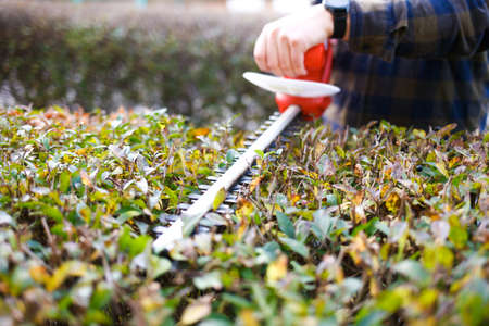 Man shaping bushes with an electric trimmer for shrubs 写真素材
